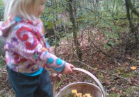 Collecting mushrooms